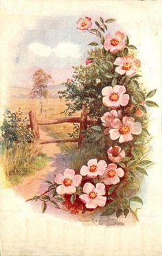 Vintage Flowers, Vintage Floral, Vintage Prints, Vintage Postcards, Vintage Ephemera, Vintage Greeting Cards, Vintage Paper, Victorian Art, China Painting