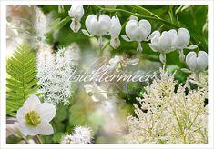 Bepflanzungskollektion für Gräber im Schatten von Bäumen mit weißen Blüten
