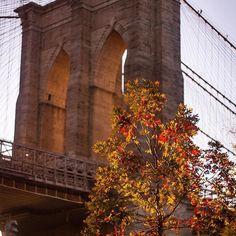"what_i_saw_in_nyc: ""Photo by @erica_mengouchian  #newyorkcity  #brooklynbridge  #brooklyn  #what_i_saw_in_nyc  #fall #autumninnewyork"""