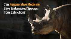 Can Regenerative Medicine Save Endangered Species from Extinction? To learn more about this and employment at RMS read more and call us at (877) 867-4551.