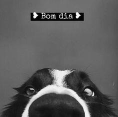 ♥ bom dia !