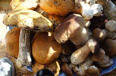 polish mushrooms