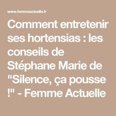 """Comment entretenir ses hortensias : les conseils de Stéphane Marie de """"Silence, ça pousse !"""" - Femme Actuelle"""