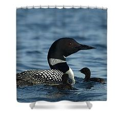 Common Loon Family Shower Curtain by James Peterson I was privileged to be there when these two baby loons were hatching.  one of them thought I was it's parent and followed me around in my kayak.  I put it back on the nest. this photo was taken the next day.