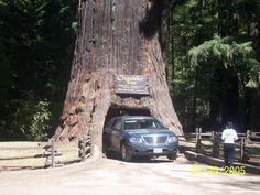 Did Muir Woods National Park with Rolf and Mom as we drove down PCH 1.