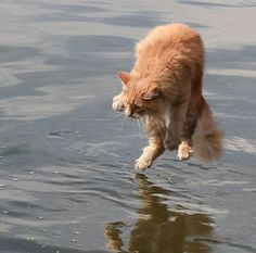There's a whole lot more on this web page...funny stuff!  Cat Photos Taken At Just The Right Moment