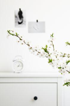 Spring photoshot inspirations #photoshot #white #decor