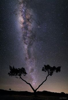 """""""Coup de foudre"""" (""""Love at first sight"""") by Luc Perrot """"The plains of Cafres is a region of Reunion Island close to the volcano, the Piton de la Fournaise, with few houses and little light pollution. Here, the Milky Way appears to split the Tamarind tree. I went 3 times to this place to realize this picture. The first time, nine months ago. The framing was good but the Moon too strong."""" """"The second time, I arrived a bit too late, the Carina Nebula was too close to the horizon to be…"""