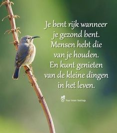 Je bent rijk wanneer je gezond bent … You are rich when you are healthy … Strong Quotes, True Quotes, Words Quotes, Sayings, Qoutes, Why Do People, Thing 1, Real Friends, Good Thoughts