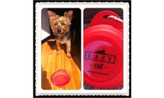 Even cute doggies are Lazy Cat fans! Scotch loves drinking from his Collapse-a-Bowl - available @ http://www.lazycatstore.com/products/collapse-a-bowl - $5.95/ each