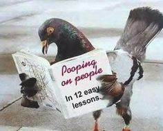Humor, Pigeon reading.. Pooping on people in 12 easy lessons.