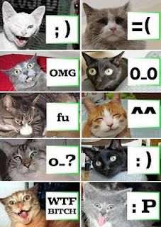 Cat faces...