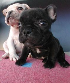 If you have something to say come say it to our face and BEWARE we love giving kisses #puppies