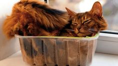 Science Tries to Explain Why Cats Love Boxes So Damn Much #CatsWillBeCats