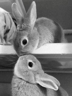 bunny kisses are the best kisses...