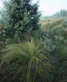 Lomandra Or Poa S Around The Border Look Amazing With