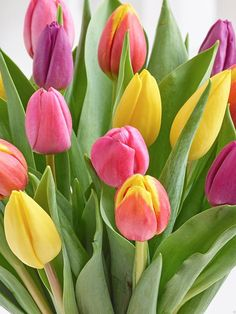 Lovely tulips https://www.facebook.com/JohannasOasis1/photos/a.887095084764496.1073741828.887082268099111/1106435209497148/?type=3&theater