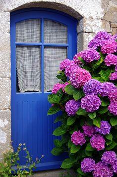 Île-aux-Moines, Morbihan, France door, The hydrangea steals the show! Hortensia Hydrangea, Hydrangea Garden, Purple Hydrangeas, Beautiful Gardens, Beautiful Flowers, Big Flowers, Garden Cottage, Cottage Door, The Doors