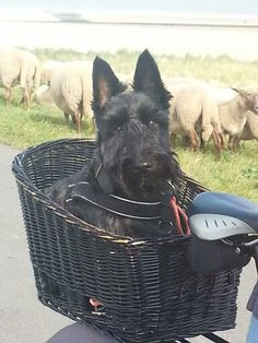Daan loves to go bicycling in the Scottish countryside. :)