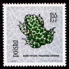 Frogs and Toads on Stamps,Covers and Postmarks. - Stamp Community Forum