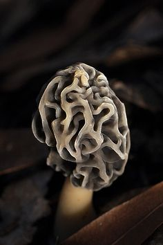 morel | Flickr - Photo Sharing!