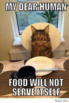Humans are here merely to serve cats. Dogs have owners, cats have staff.  I suggest my staff should get busy!