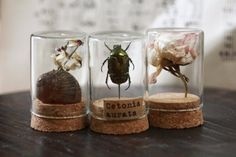 Jewelry and accessories for the curious minds by Curionomicon Glass Bell Jar, The Bell Jar, Glass Domes, Cabinet Of Curiosities, Nature Collection, Apothecary Jars, Displaying Collections, Bottles And Jars, Nature Crafts