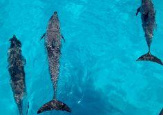 Zwemmen met dolfijnen! https://www.hotelkamerveiling.nl
