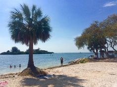 Anclote Key Preserve State Park (New Port Richey, FL): Top Tips Before You Go - TripAdvisor