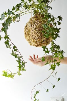 Kokedama hanging plant in moss | Girlfriend is Better