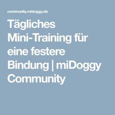 Tägliches Mini-Training für eine festere Bindung   miDoggy Community