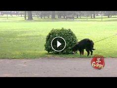 Funny Scare Prank On Dogs #HiddenCameraPranks  #funny #prank