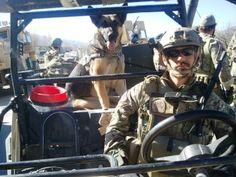 Military service dog