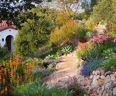 Tips for Taming a Slope - Grow Natives Rocks and naturalistic plantings turn an eroding California hillside into a colorful oasis that blends with the surrounding desert habitat. Succulents such as Agave, Crassula, and Bulbine thrive here. Other good candidates for a dry hillside include Pennisetum, salvia, yarrow, and lamb's-ear.
