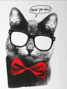 Meow you doin?