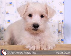 Martin's Kennel :: All Puppies
