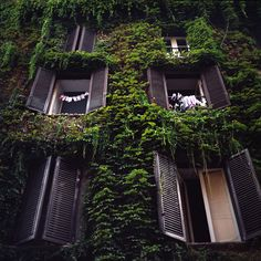 urbangreens:    Green house, Rome by andrylik  viaevoke