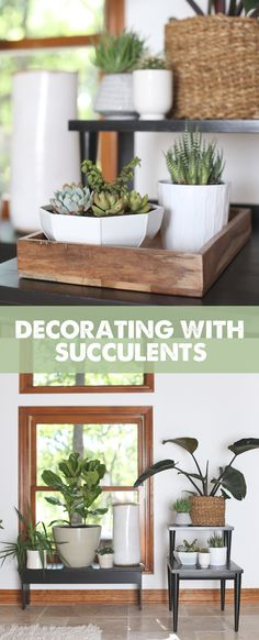 Decorating With Succulents: Three trends to try along with product recommendations to get the look.