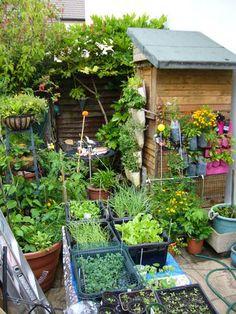 vertikales gem se gem se anbau auf dem gro stadt balkon sein redaktion green life. Black Bedroom Furniture Sets. Home Design Ideas