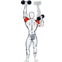 Deltoid Workout, Buttocks Workout, Shoulder Workout, Health Fitness, Arms, Sports, Fitness Workouts, Exercises, Shoulder Exercises