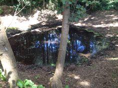 Kraterbosje