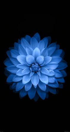 papers.co-ac99-wallpaper-apple-blue-lotus-iphone6-plus-ios8-flower-5-wallpaper.jpg 744×1 392 пикс