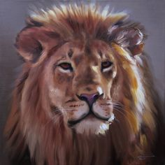 Africa Lion wildlife animal large 30x30 oils on canvas painting by RUSTY RUST / L-164 on Etsy, 538.10 ₪
