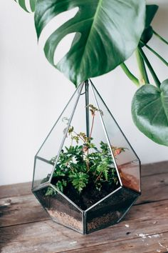 Create an urban jungle with a cute glass terrarium. Such a simple, easy way to bring a little of the outdoors into your home.