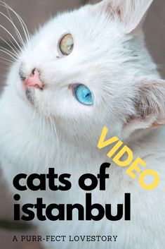 I'm not a cat person but this city made me to one! It's not sure how many street cats there are in Istanbul but you will not get around without meeting a ton. Influencer, Travel Videos, Cat Gif, Istanbul, Adventure, Street, City, Awesome, Adventure Game