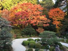 京都の枯山水が燃えるような紅葉に包まれる【画像集】