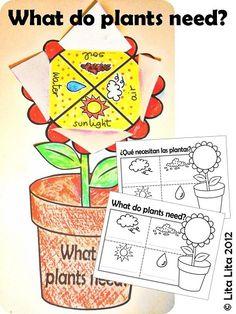 Idea chula necesidades d una planta
