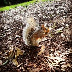 You know it's Autumn when a Squirrel comes out to play...