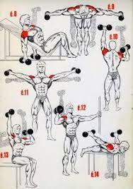 Resultado de imagen de shoulder musculation