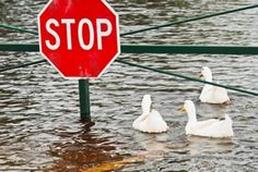 This link talks about floods and how to stay safe when one hits.  One things that this site did that many of the others that I looked at with flood relief tips and resources, was provide descriptions of the different types of floods that potentially can take place in the various parts of the U.S.